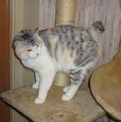 У кошки зеленая рвота у кошки ухо